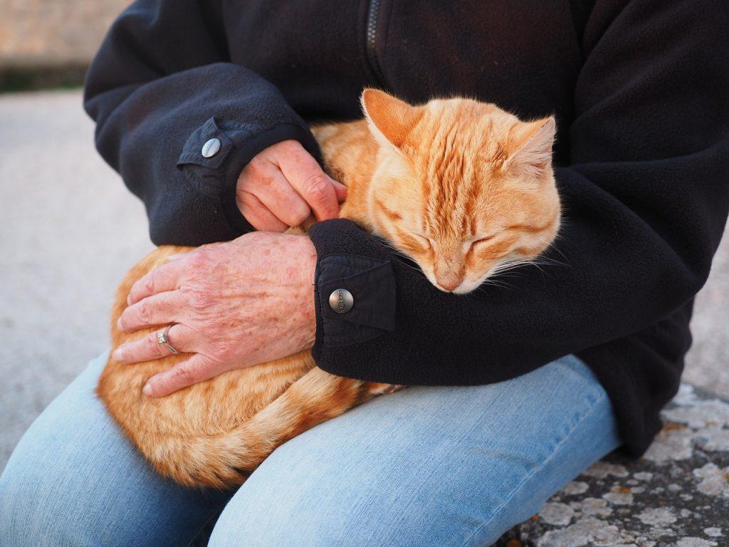 бездомные кошки, день кошки, день кошек