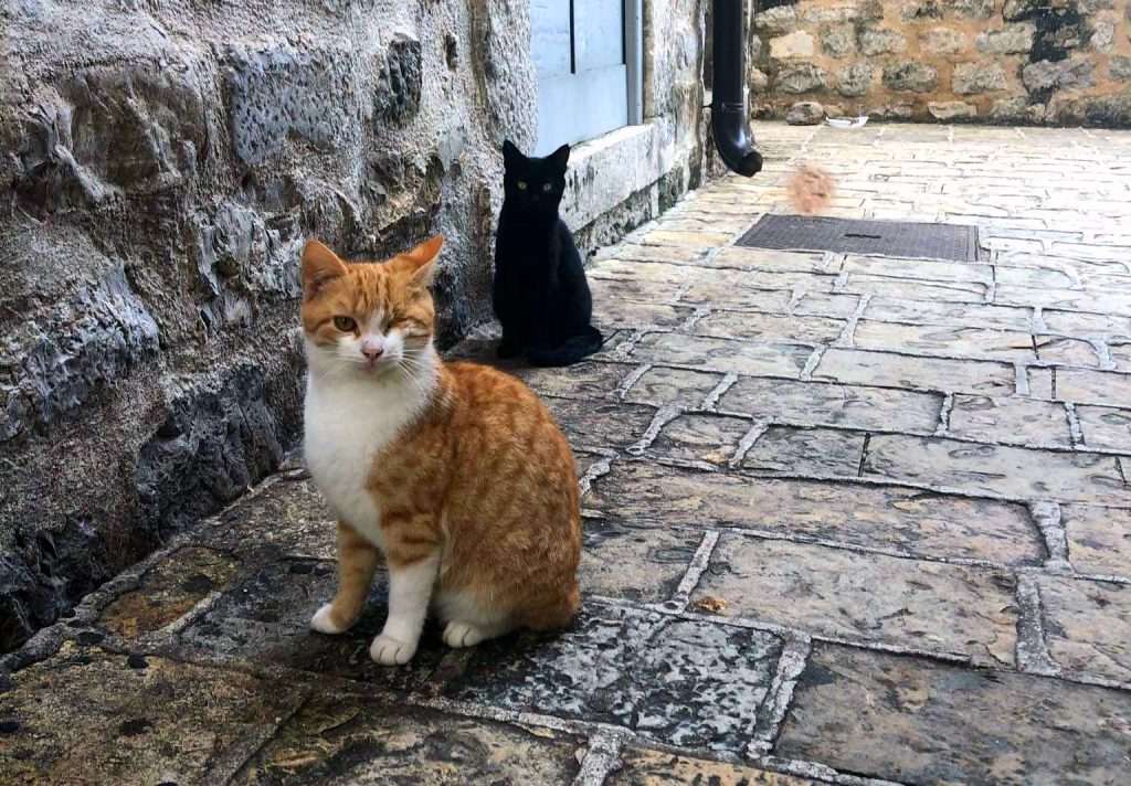 день кошек, бездомные кошки, уличные кошки, день кошки
