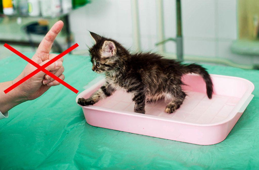 нельзя ругать котенка за оплошности при приучении к лотку, приучение к лотку котенка, приучение кота к лотку