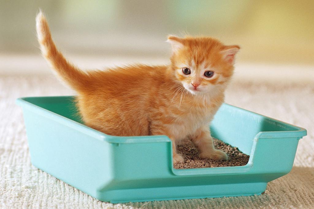 лоток для котенка, лоток со входом для котенка, приучение кота к лотку