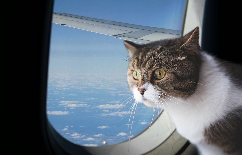 авиаперелет с котом