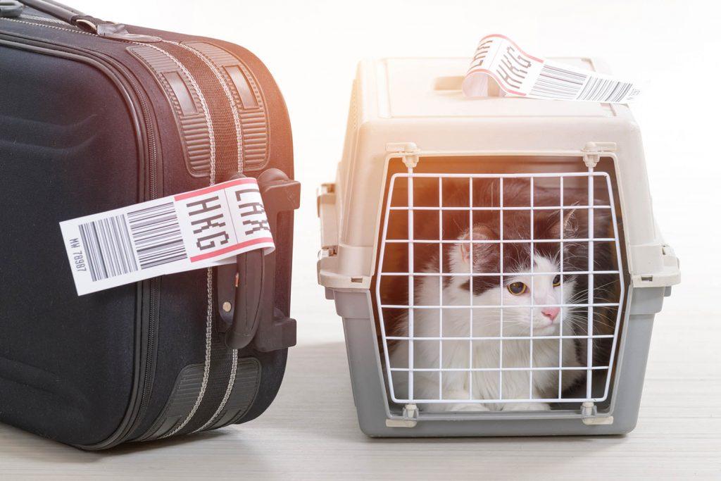 авиаперевозка кота