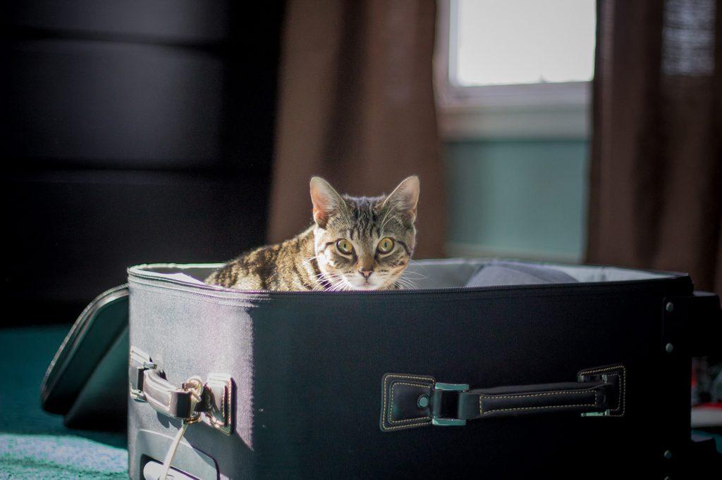 перевозка кота на самолёте