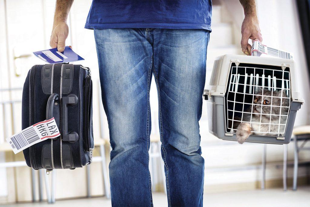 авиапутешествие с котом