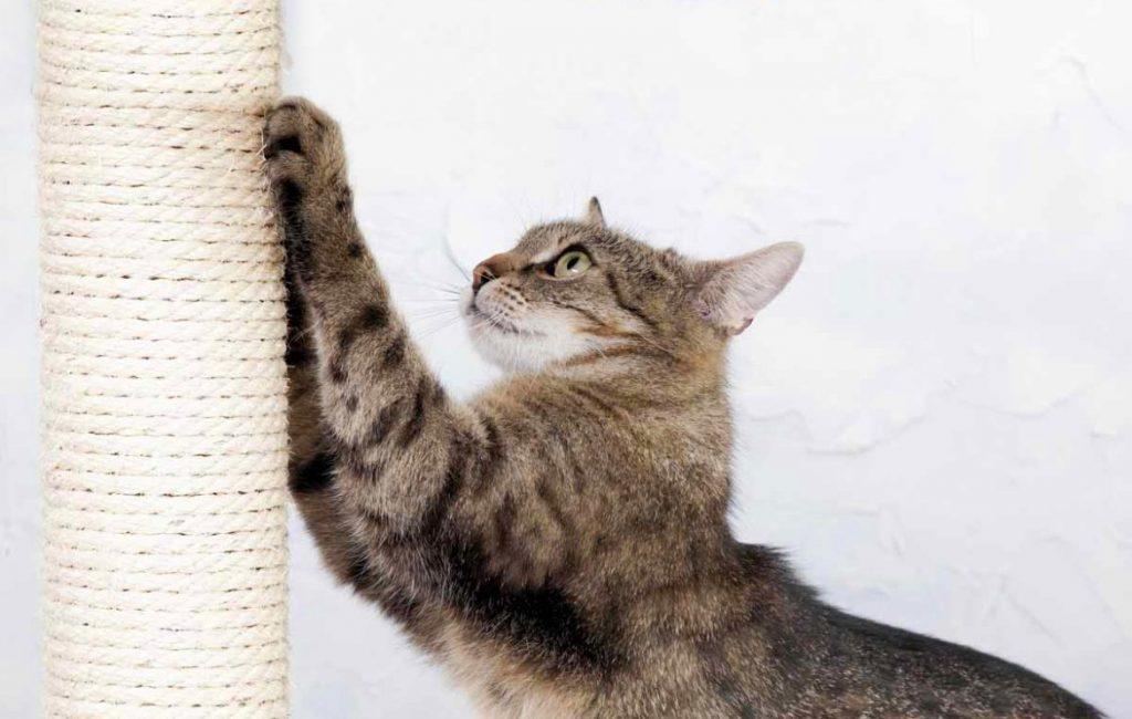 кошка точит когти о сизалевую когтеточку