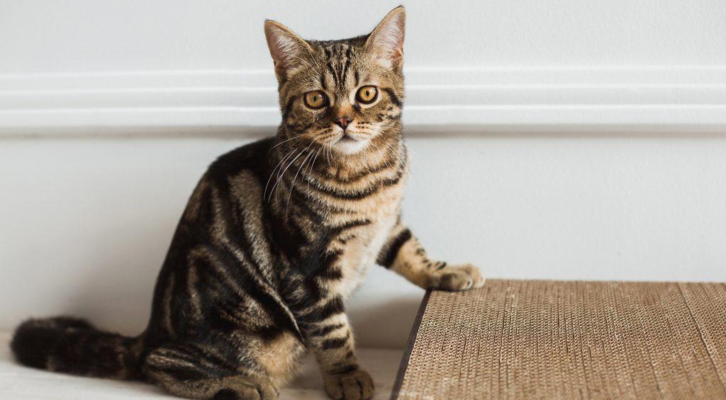 котенок у когтеточки точит когти