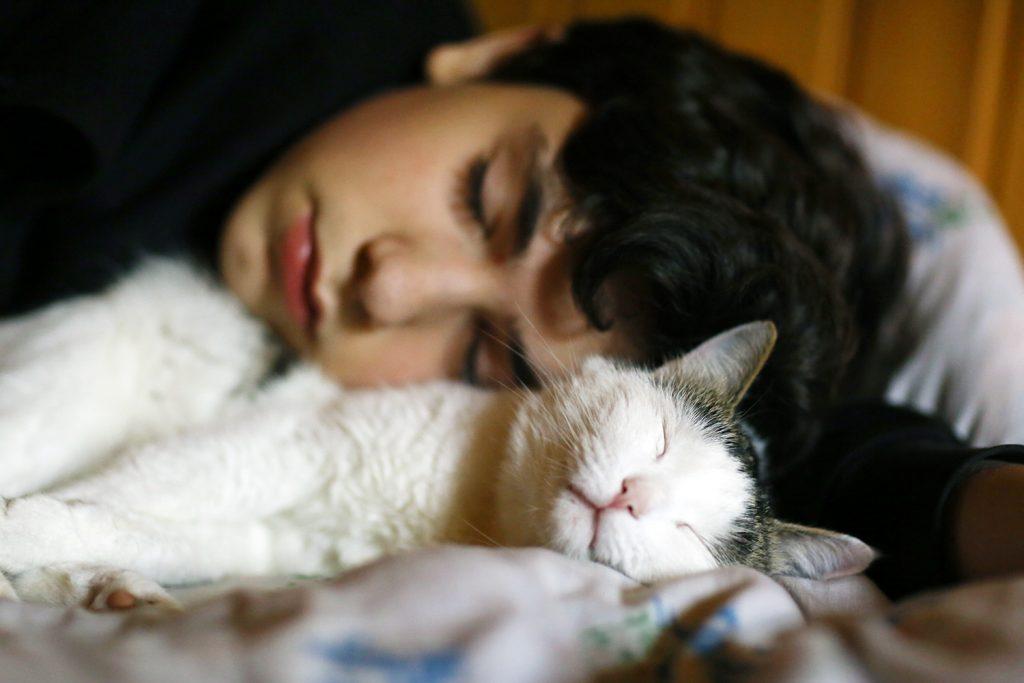 кот спит с хозяином