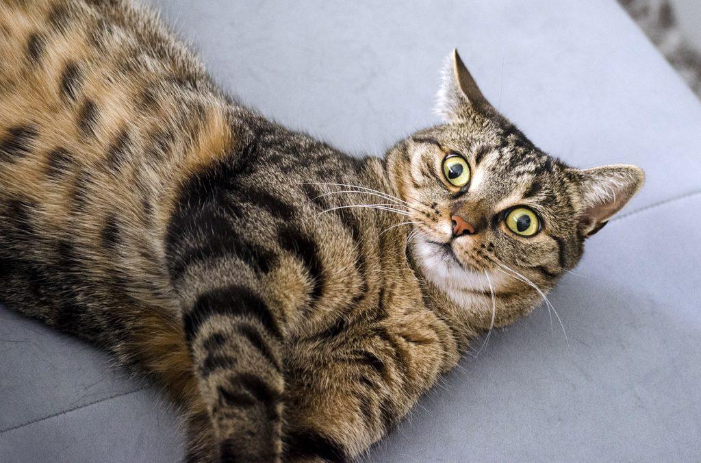 понять настроение кошки