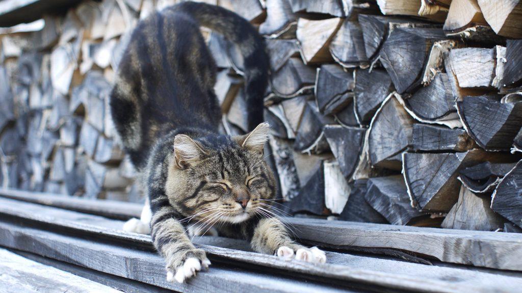 кошка точит когти о дерево - как выбрать когтеточку