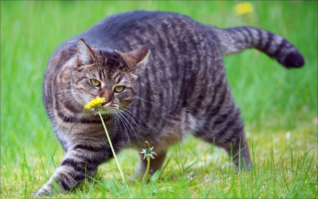 толстый кот, лишний вес у кота