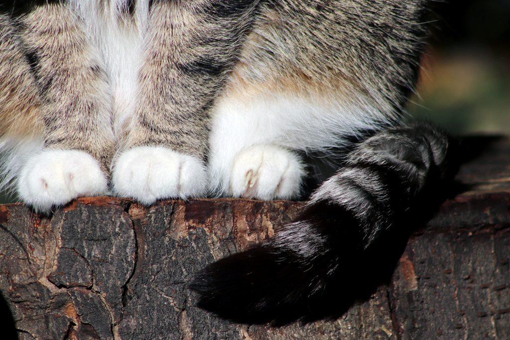 эмоцци кошки оп