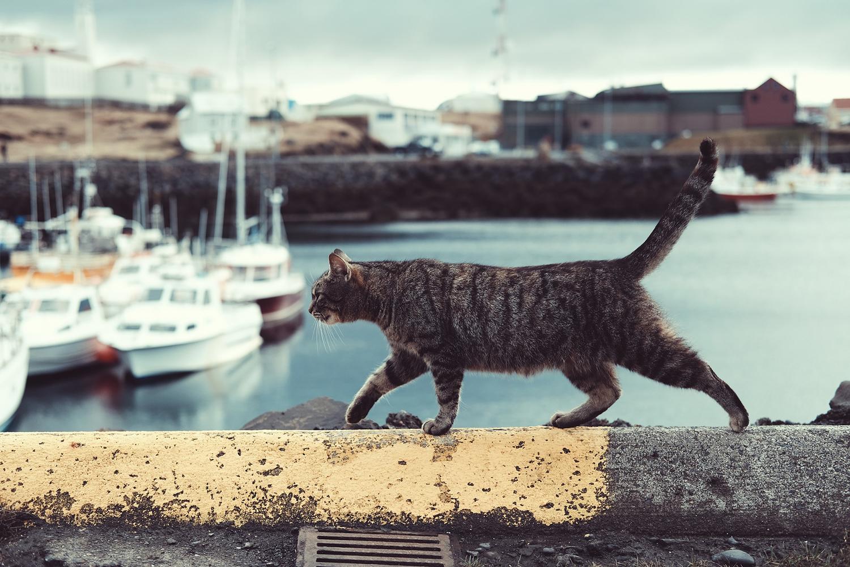 эмоции кошки по хвосту