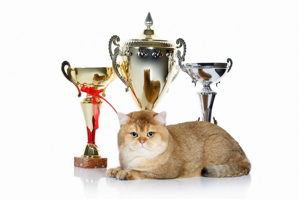 как открыть питомник - кот многократный чемпион