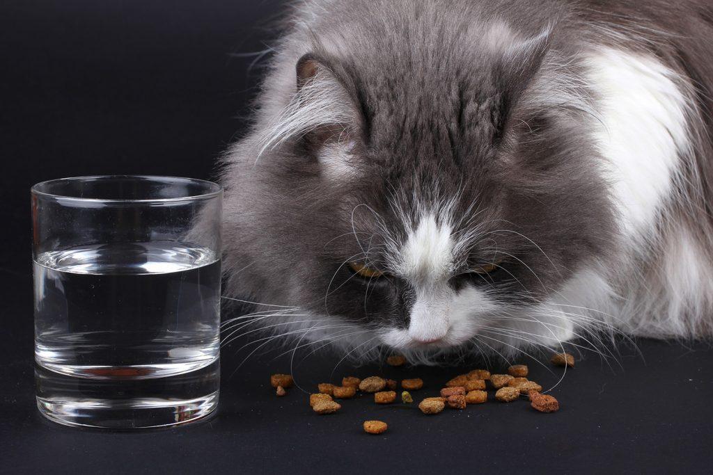 сухой корм или натуральный для кошки