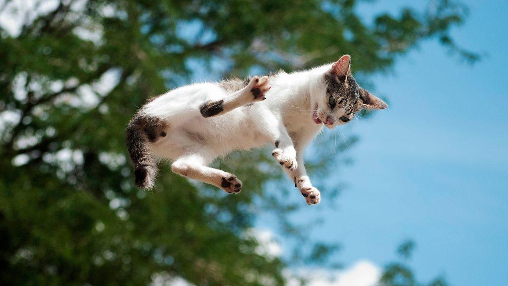 кошки приземляются на лапы