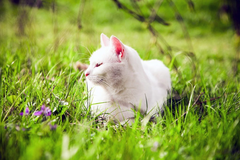 крем от загара для кошек