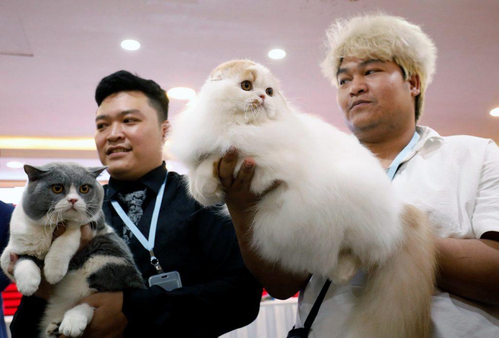 Что такое порода кошки