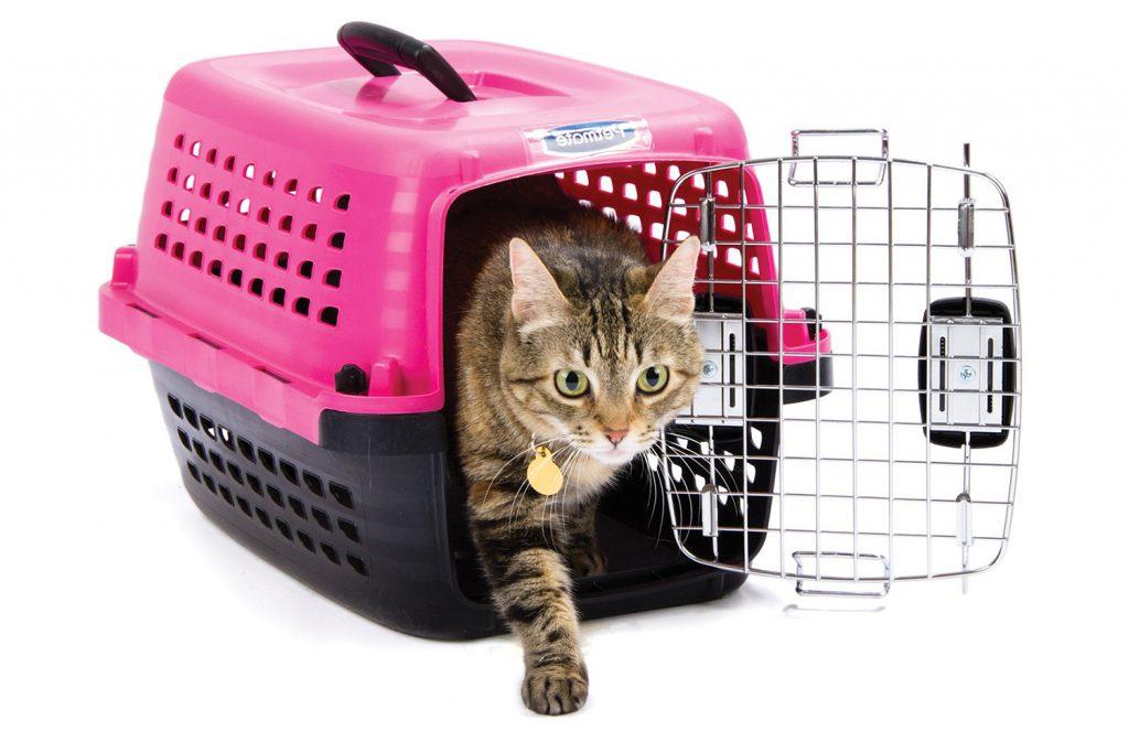 Какая переноска для кошек лучше
