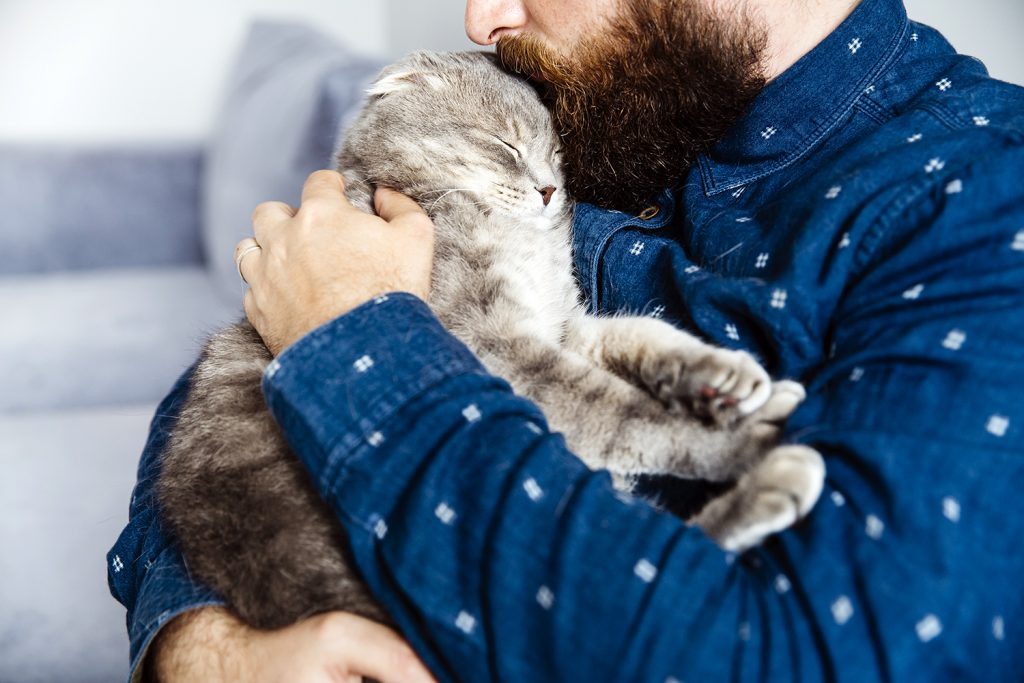 понос у кота лечение