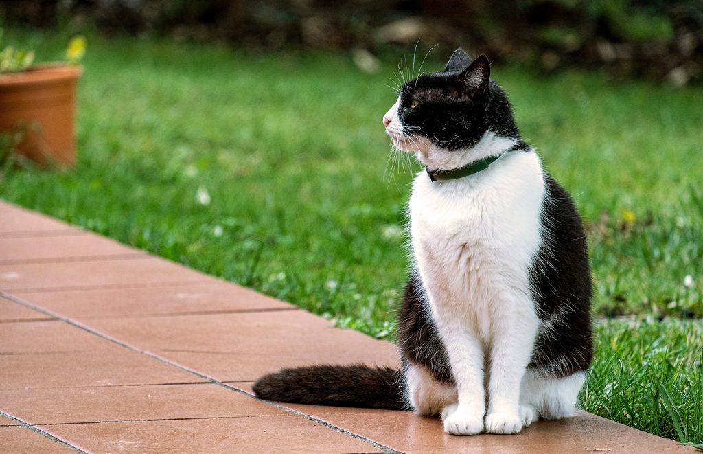 эффективное средство от блох для кошек