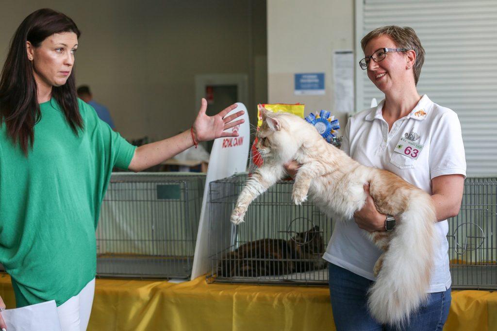 как сделать родословную кошке без документов