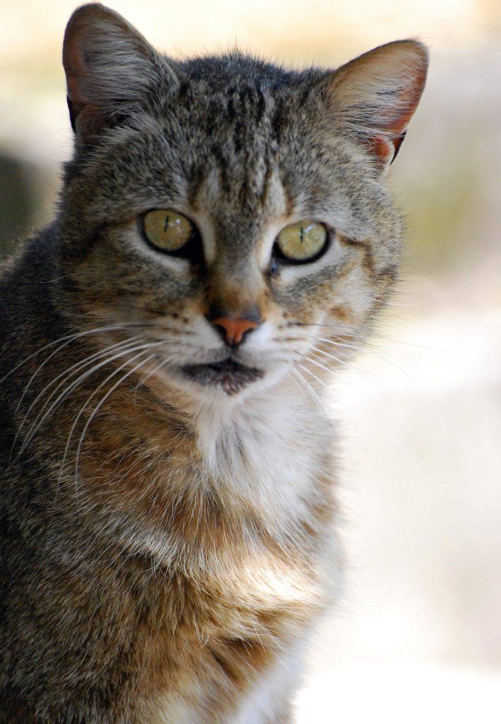 почему у кота рвота