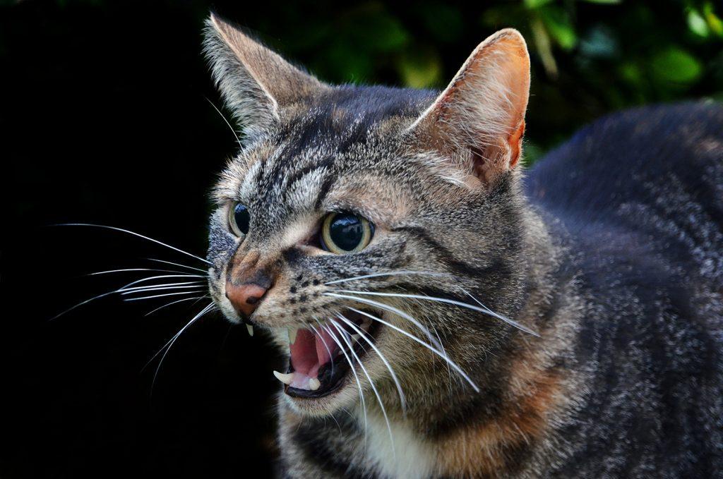 каких звуков боятся коты
