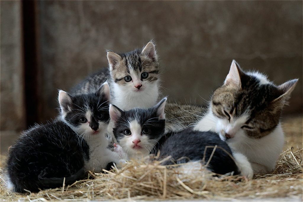 звук которого боятся коты